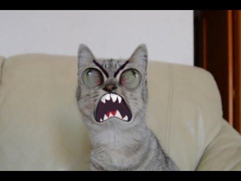 parodia memes en la vida real por mi gato rage comic in real life