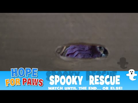 Spooky rescue - watch until the end... or else!