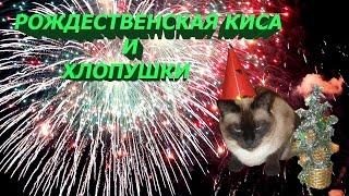 Рождественская киса и хлопушки/ Christmas kitty and crackers