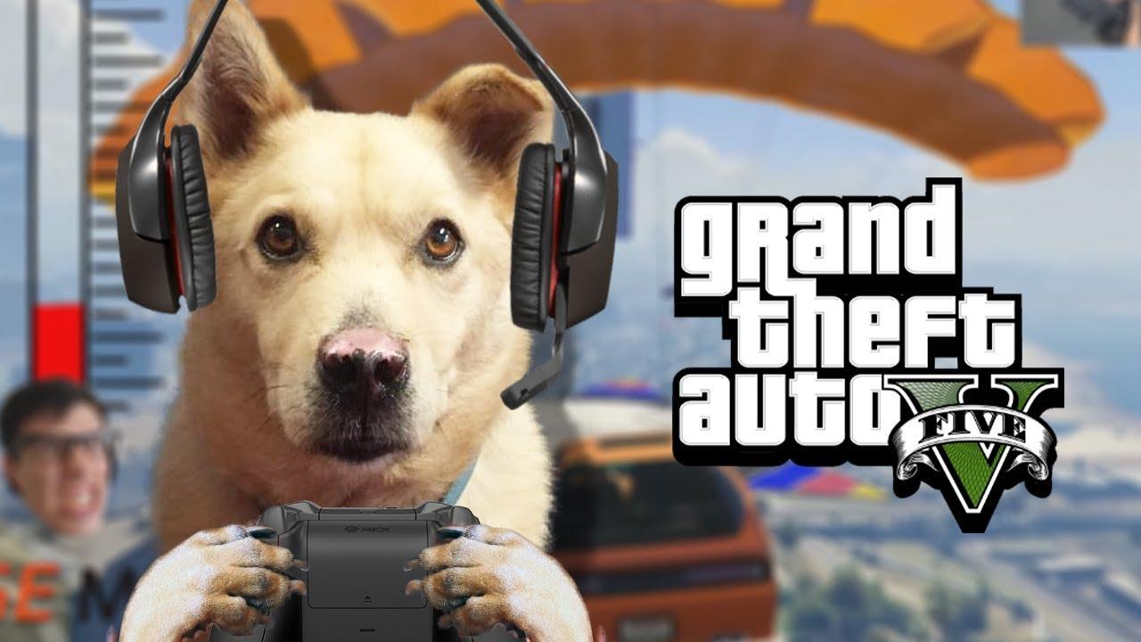 Ready Player Dog Gta  Gameplay