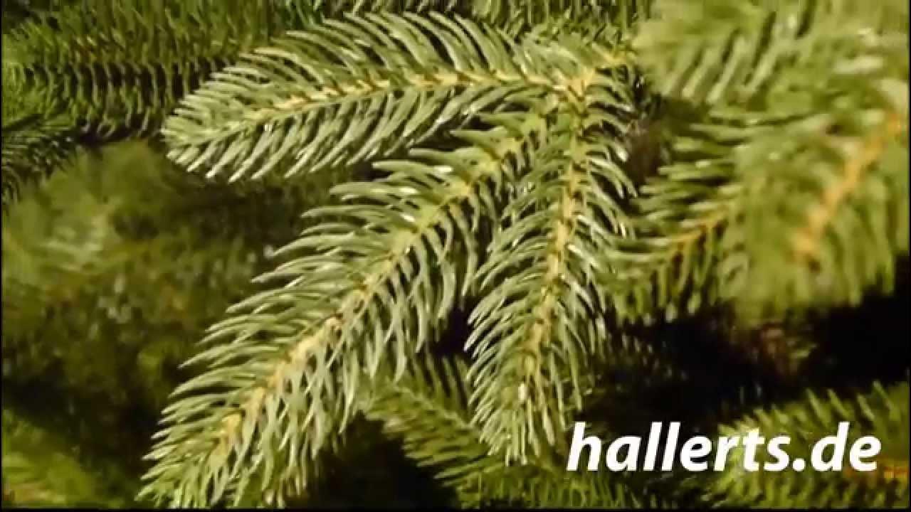 Plastip spritzguss tannenbaum youtube - Tannenbaum spritzguss ...