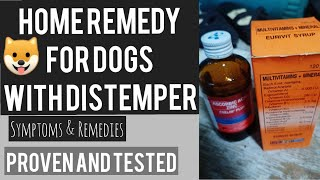 SYMPTOMS & HOME REMEDY FOR DOGS WITH DISTEMPER