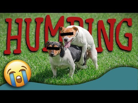 Why Do Dogs Hump? (Dog Humping Explained) | How To Stop Dog Humping