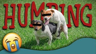 Why Do Dogs Hump? (Dog Humping Explained)