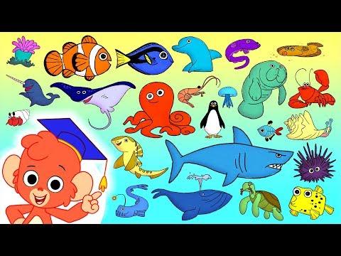 Animal ABC | learn the alphabet with 26 cartoon Ocean Animals | ABCD sea animals kids education