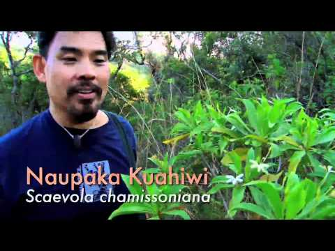 Nowhere Else on Earth: Indigenous Plants of Hawaii