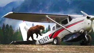 2: BEAR Vs AIRPLANE