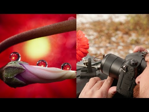 dpreview-tv:-creating-better-macro-photos-with-don-komarechka