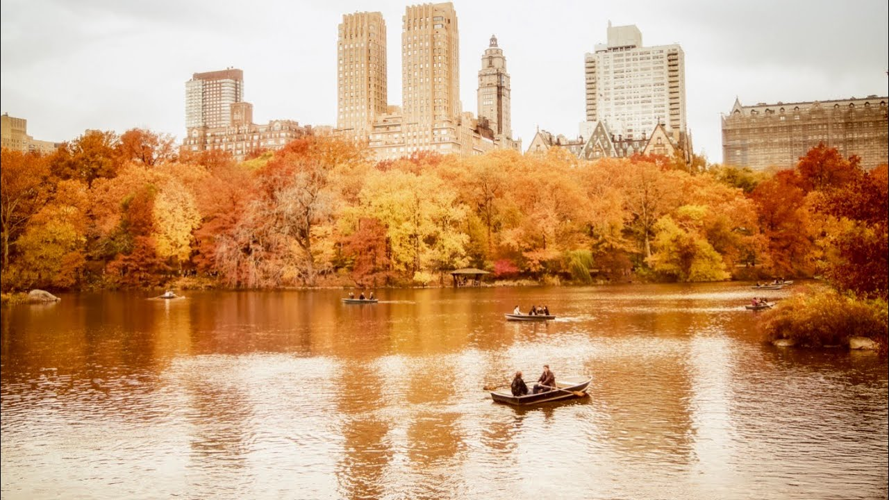 New York City  Central Park Looks Like Gold Before Christmas K