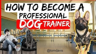 How to become a professional dog trainer? - Everything you need to know to become a dog trainer-