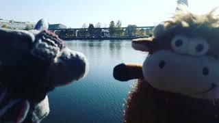 Смотреть видео Сегодня Хрюн и Бычок решили погулять возле Останкинского Пруда онлайн