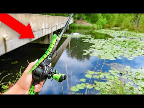 Fishing W/ SNAKES & RATS In HIDDEN Swamp (BIG FISH)