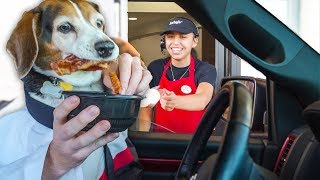 DOGS IN THE DRIVE THRU!