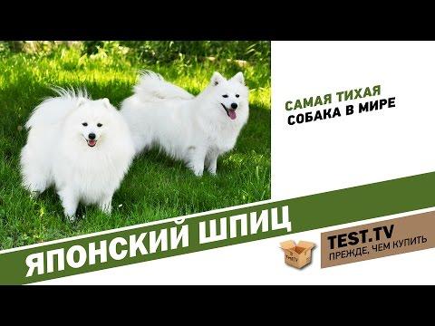 Породы японских собак: японская собака сансю, сколько см в холке
