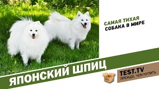 TEST.TV: Все для животных. Японский шпиц самая тихая собака.