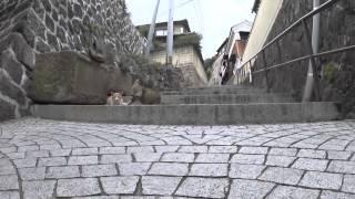 【猫目線動画】千光寺坂 / 広島 CAT STREET VIEW 尾道編