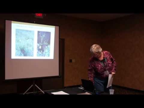 Big Bluestem Management Using High Density Grazing, Leslea Hodgson, MN