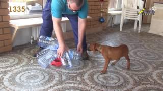 Тест щенка риджбек 1335