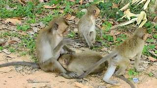 Never see this before, OMG! funny adult monkey, Look so cool, Animals Troop Part 109