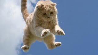 Бессмертные Коты И Кошки. Падения С Большой Высоты.