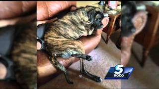 Metro family believes dog is largest in the world