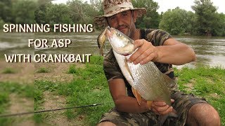 Spinning Fishing for Asp with Crankbait/ Spinnfischen auf Rapfen/ Спинингов Риболов на Распери
