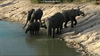 Słonie afrykańskie przy wodopoju  -świat zwierząt Afryki  - ,,Safari ''