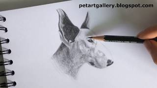 Draw a bull terrier dog time lapse