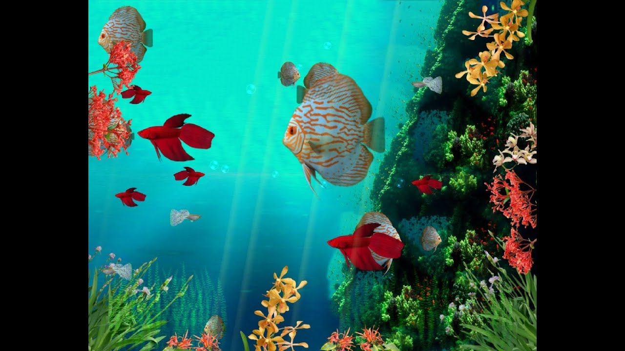 Coral reef aquarium 3d animated wallpaper http www for Animated fish tank