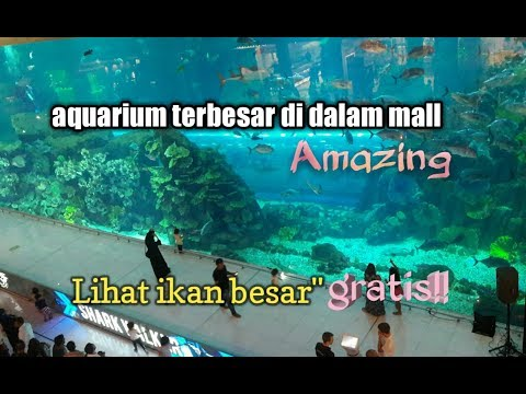 AQuarium terbesar di mall dubai//aquarium biggest in dubai