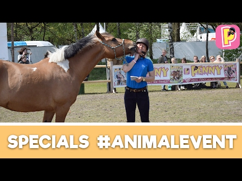 Felinehoi op Animal Event | Specials | Penny TV