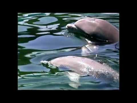 Dolphin Dream with 727 Hz