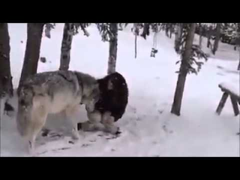 canavar ve qiz