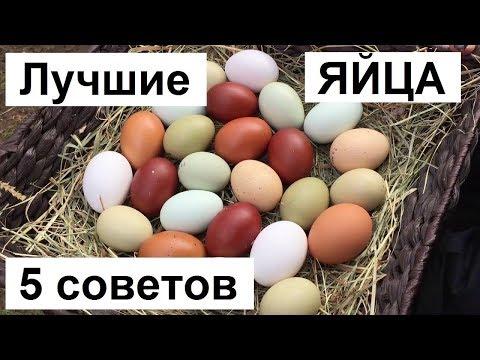 Как выгодно продать куриные яйца. Какой спрос на куриное яйцо. Куры несушки содержание.