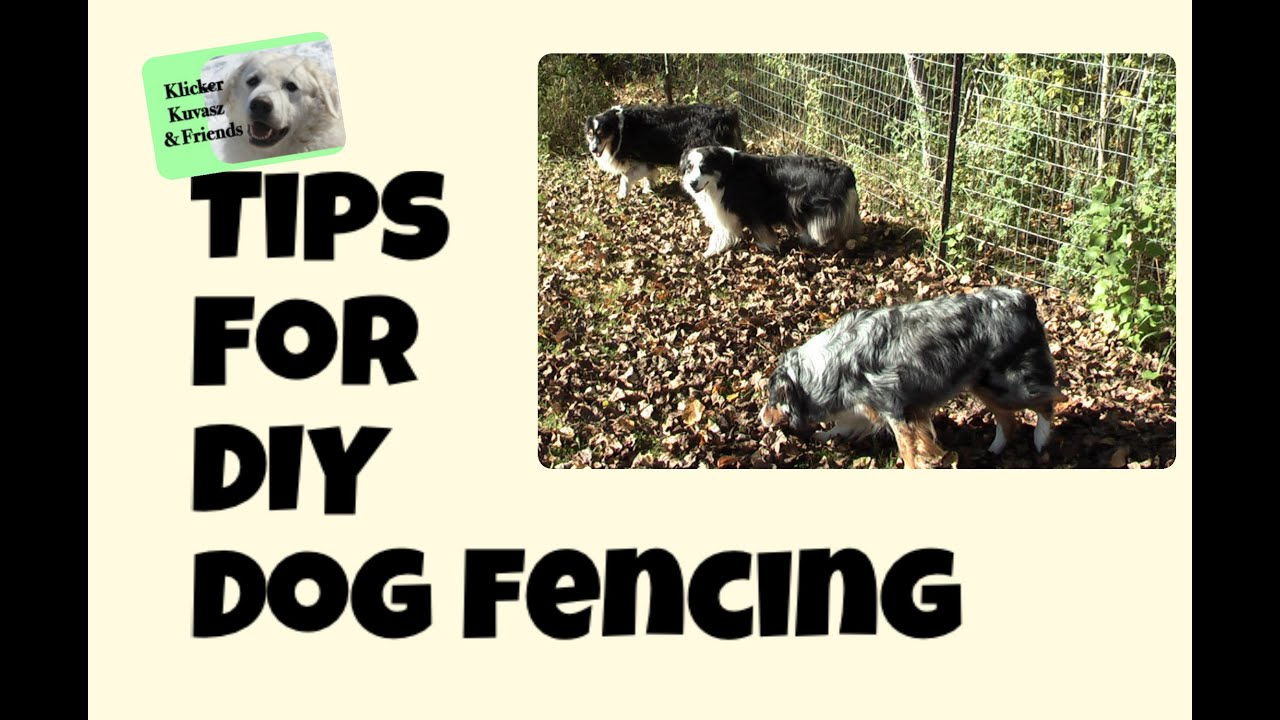 Dog fence diy diy dog fence ideas - Tips For Diy Dog Fencing