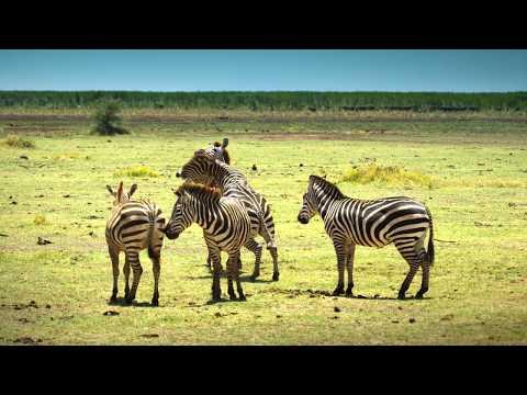 Serengeti - Deutsch 4K DOKU