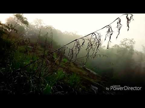 The Rainforest - Trip to Western Ghats