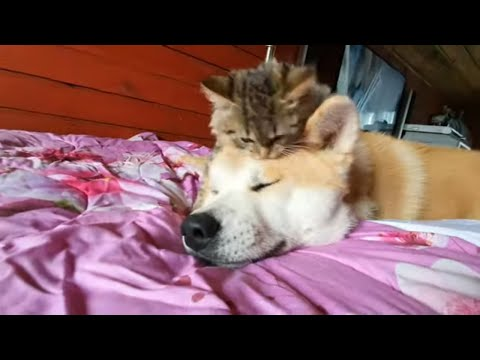 Вопрос: Кто более агрессивен и зол – кот или собака?