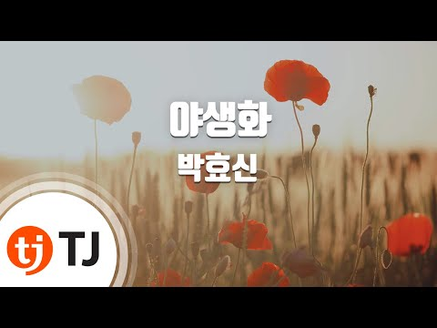 [TJ노래방] 야생화 - 박효신 (Wild Flower - Park Hyo Shin) / TJ Karaoke