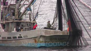 Commercial Fishing Boat  Hauling In A Purse Seine Net