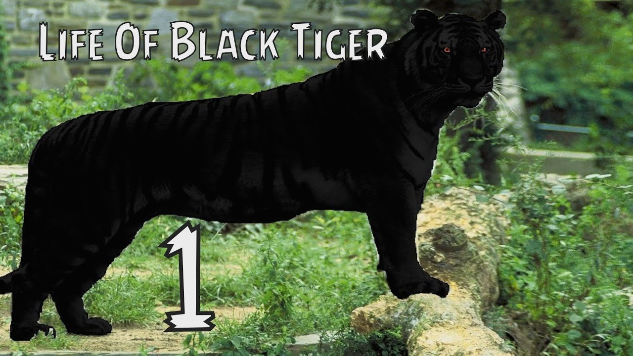 Jaguar Iphone Wallpaper Life Of Black Tiger Part 1 Walkthrough Full Story