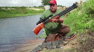 Airguns, Arrows and Alligators.