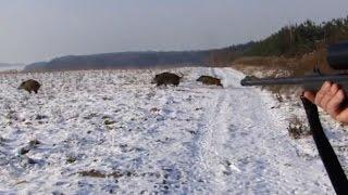Polowanie zbiorowe na dziki -Drückjagd - vildsvinsjakt - wild boar hunting  -Chasse Au Sanglier