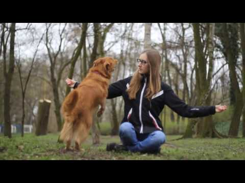 Kama the (un)usual toller | 5 years | TRICKS | Full [HD] 1080p