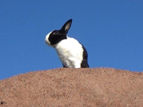2f1b8ed95d3ea Rabbit  King of the Wild Frontier - YouTube
