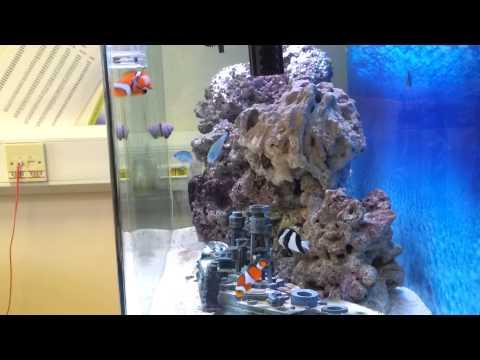 Marine Tank, Aqua One With Clown Fish Etc.