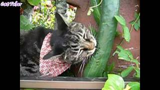 Cats and Dogs vs Cucumbers Compilation - Funny Try Not To Laugh Videos AFV 2017