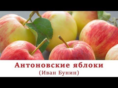 Антоновские яблоки | Иван Бунин | Аудиокнига | Рассказ | Осенние рассказы