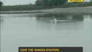Campaign to save the Ganga dolphin