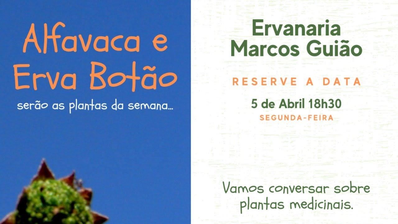 Alfavaca & Erva Botão - Conversando sobre Plantas Medicinais com Marcos Guião